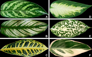 A Simple and Effective Method for Quantifying Leaf