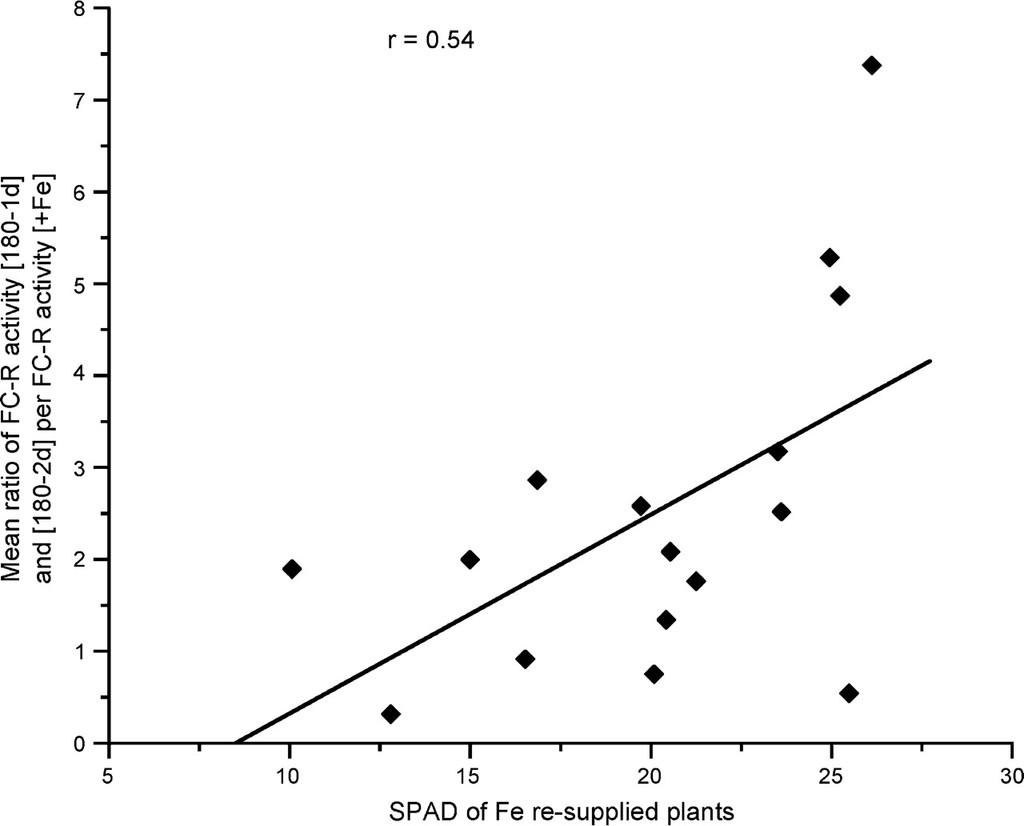 Tolerance Response to Iron Chlorosis of Prunus Selections as
