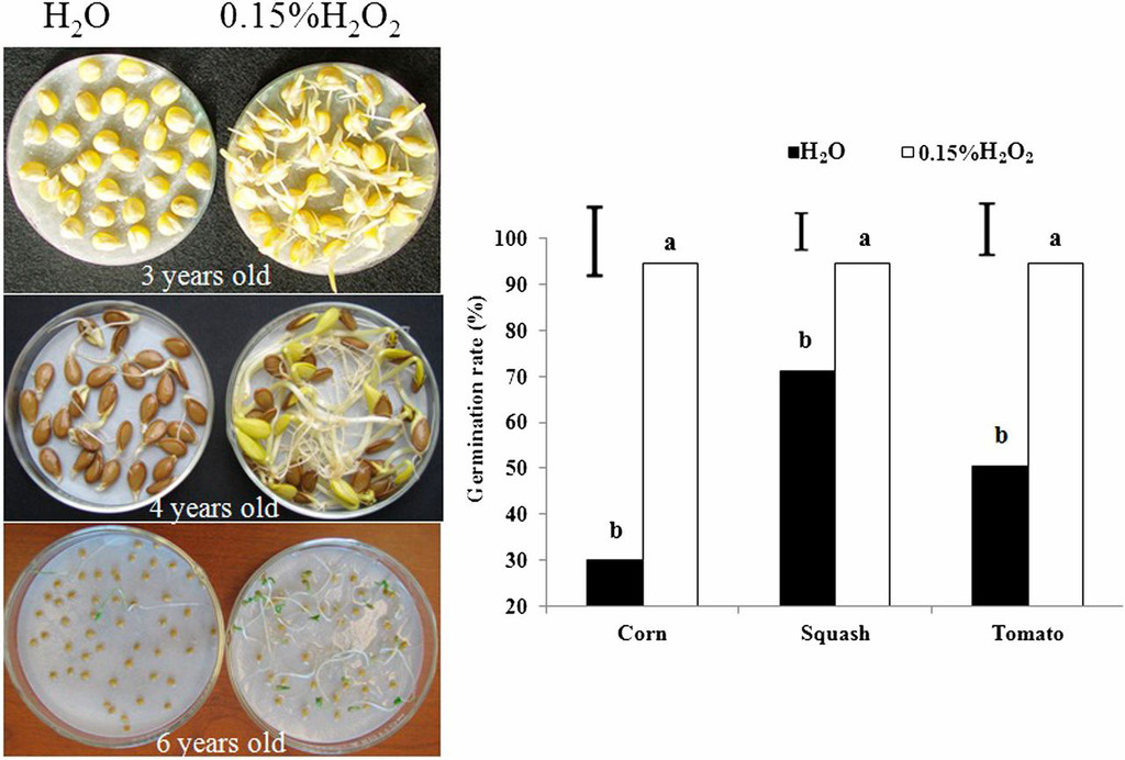 Increased Oxygen Bioavailability Improved Vigor and Germination of