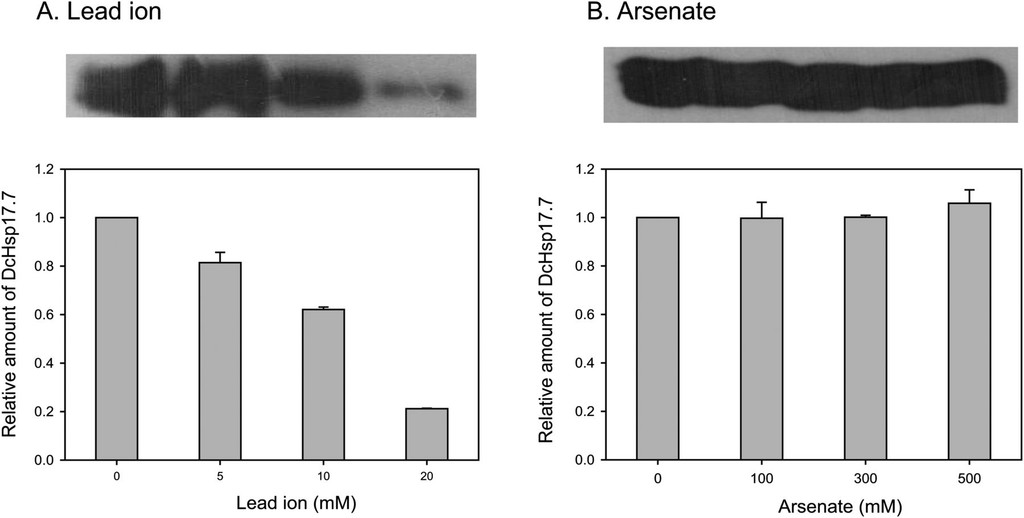 Heterologous Expression of a Carrot Small Heat Shock Protein