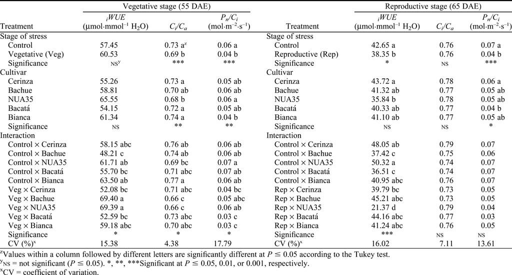 Drought-tolerant Common Bush Bean Physiological Parameters