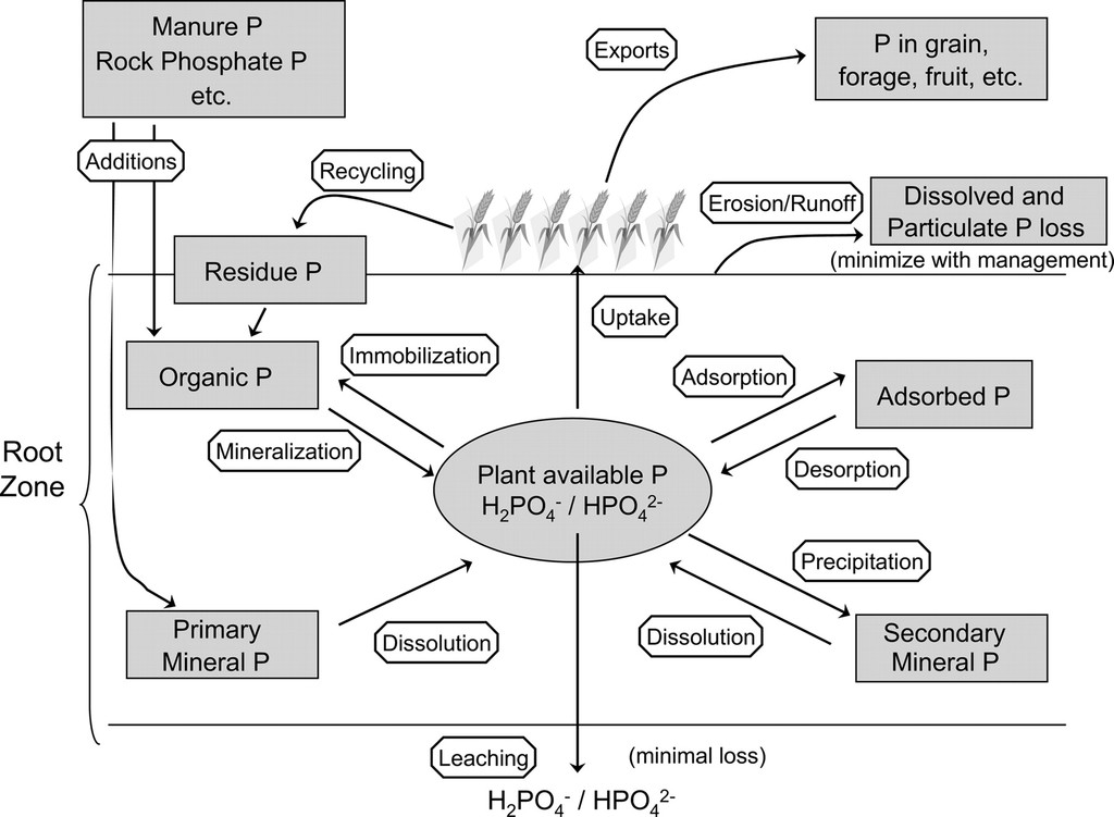 Phosphorus Sources and Management in Organic Production